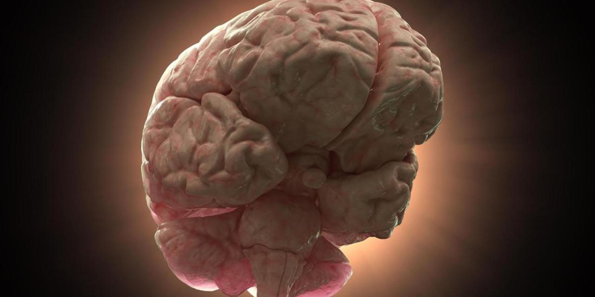 Team constructs whole-brain map of electrical connections key to forming memories